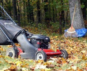 Mowing Leafs